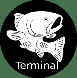 Terminal Shell – Fish
